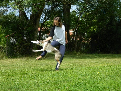 Frisbee, mon amour