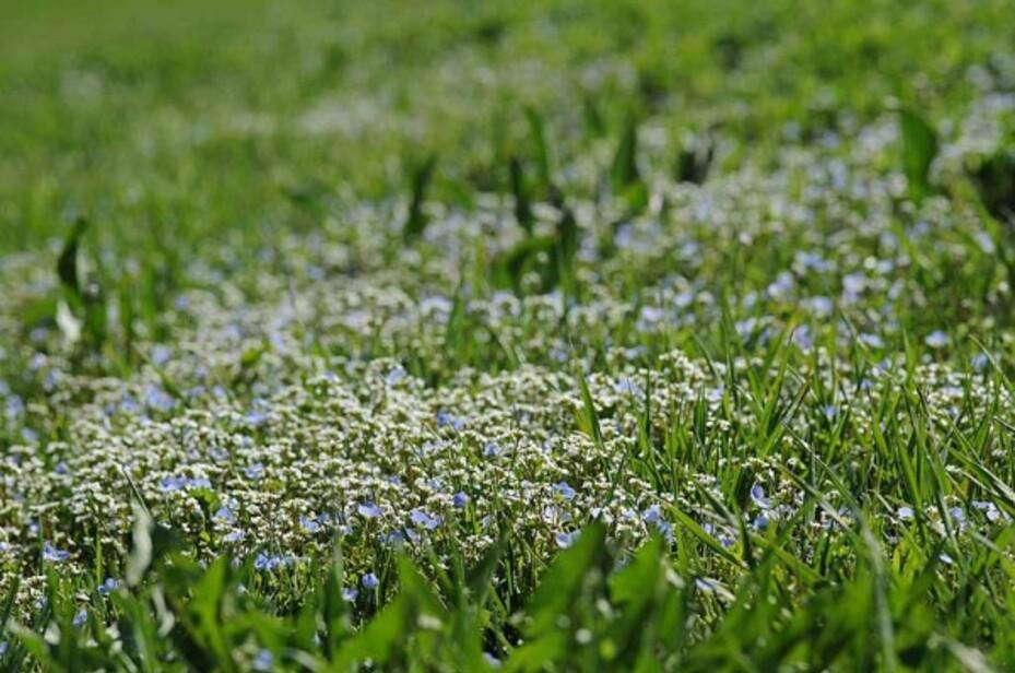 Fleurs-11 4558 modifié-1