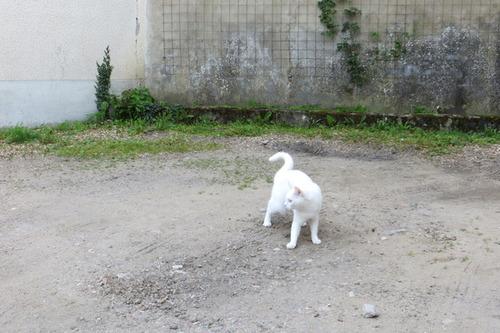 Moi j'm'éclate dans la cour avec les petits cailloux !!!
