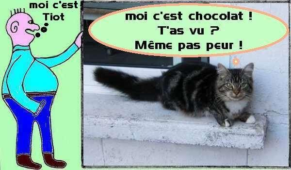 le chat chocolat à la fenêtre