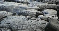 Photos pécheurs Anse des Cascades