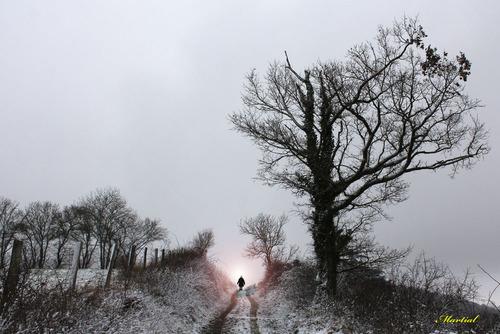 La luciole d'hiver