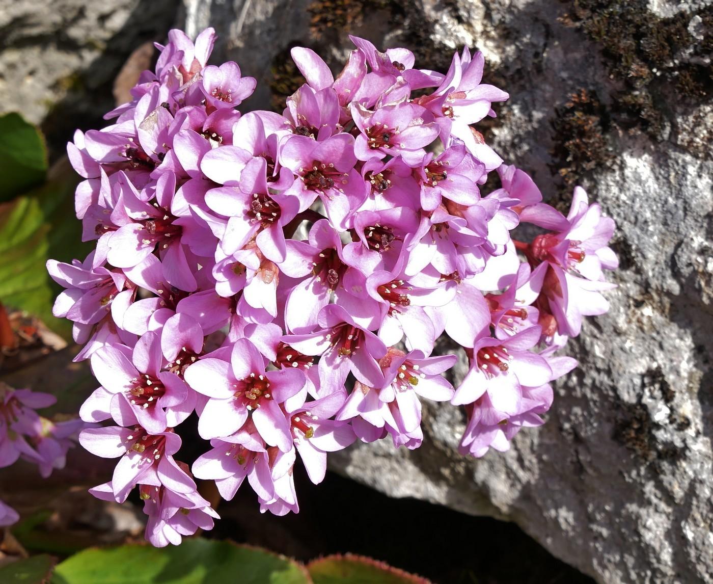 Fleurs de forêt, fleurs de jardin