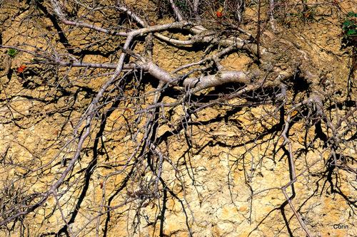 Terre et racines