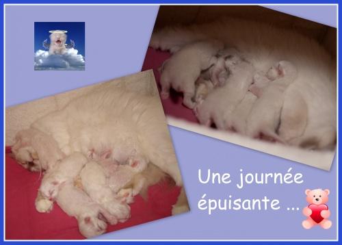 Bon Anniversaire Les Ptits Loups Kesar De Ling
