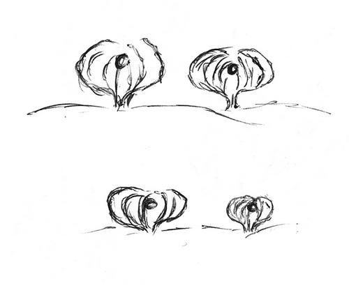 Plantes bizarroïdes