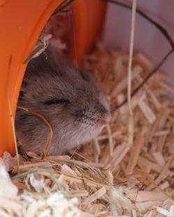 Nid hamster