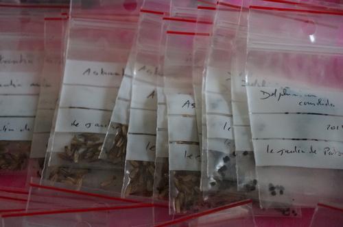 Seeds of Love : Petits sachets