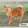 Bianca 3