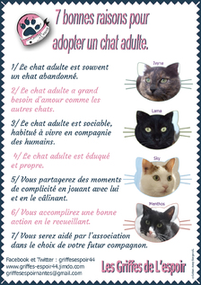 Adoptez un chat !