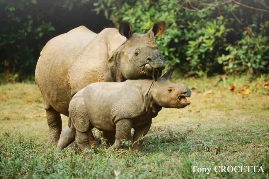 rhinoceros-1701.jpg
