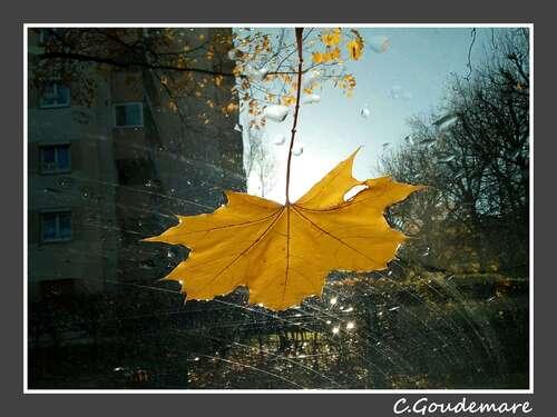 Les feuilles tombent ...