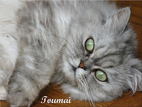 AAA-0065-toumai-de-claudine.JPG