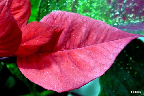 Une plante aux feuilles rouges