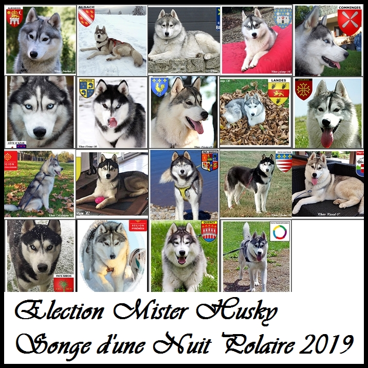 Election Mister Husky Songe 2019