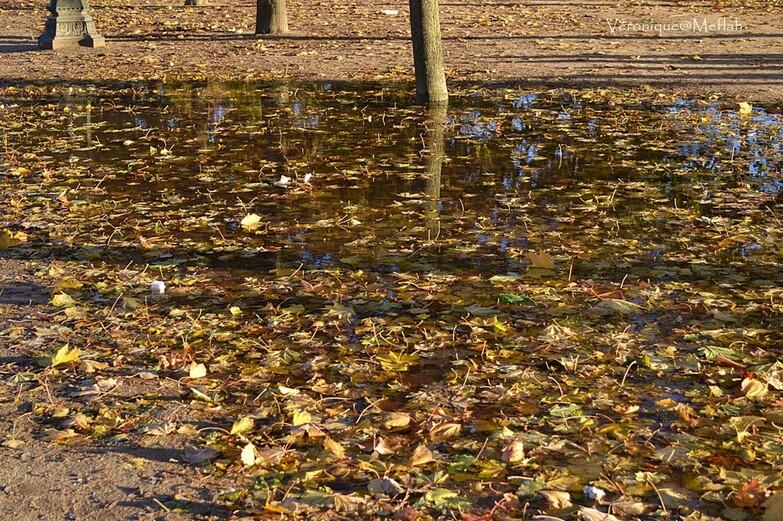 Pluie d'automne ... (Jardin des Tuileries)