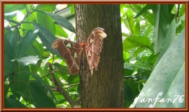 Les papillons suite