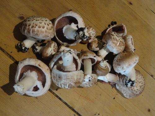 J'ai rencontré des champignons... et des p'tits lutins bien affairés! ;)