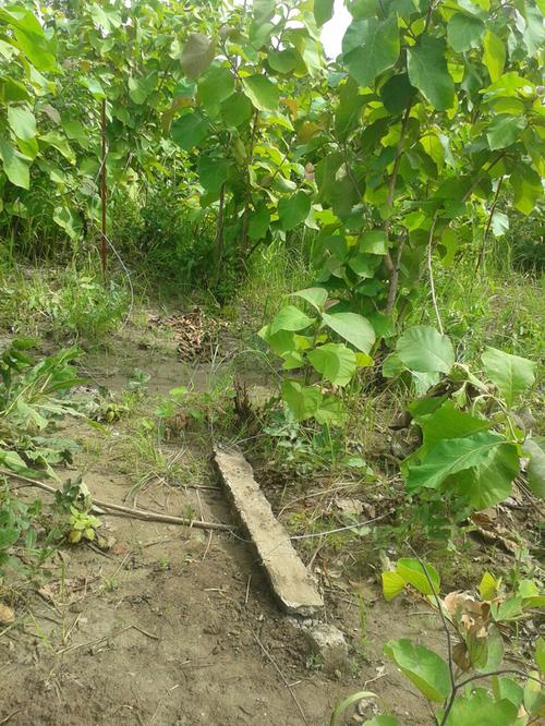 JUIN 2015: notre terrain de Pagala