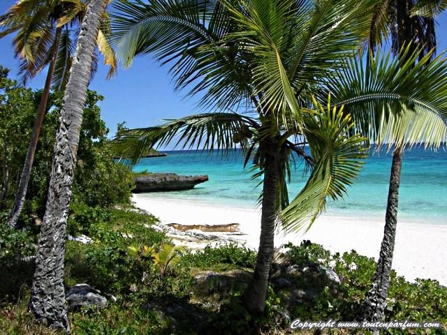 Nouvelle Calédonie 28 01 2011