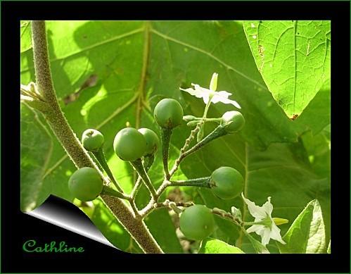 fleurs-et-fruits.jpg