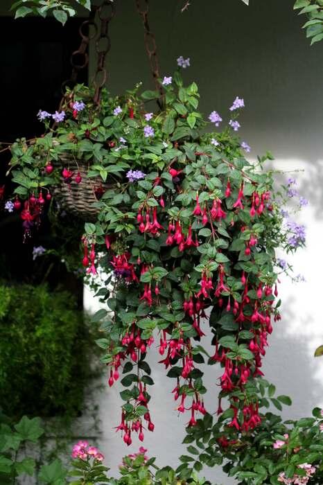 Hanging baskets : le bilan (5/8)
