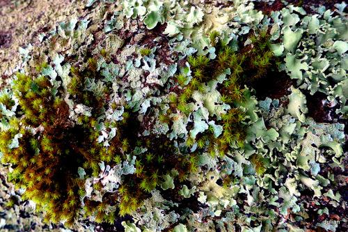 De la mousse et du lichen sur les arbres !