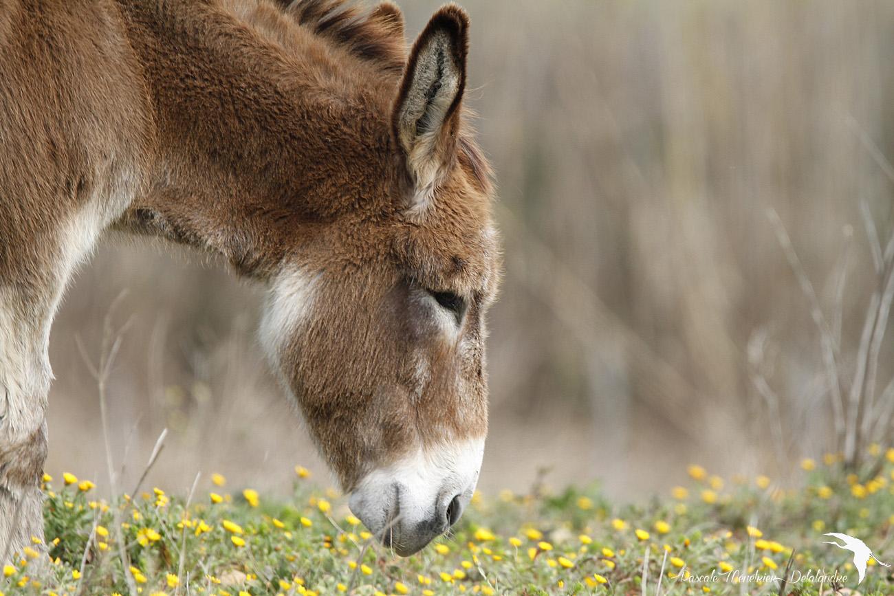 On ne force pas à boire un âne qui n'a pas soif