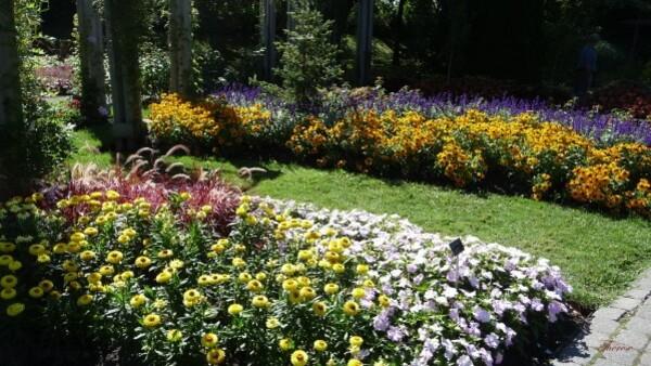 Jardin botanique (93)