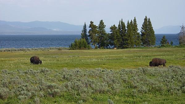 Jour 10 Yellowstone Tatankas hôtel