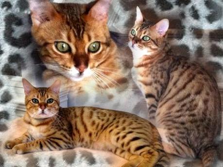 h'oraceGladys8295753-bw-leopard-peau-arriere-plan-ou-la-texture-grande-resolution