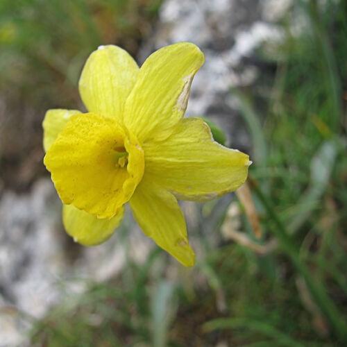 Fleurs sur la Ste Victoire
