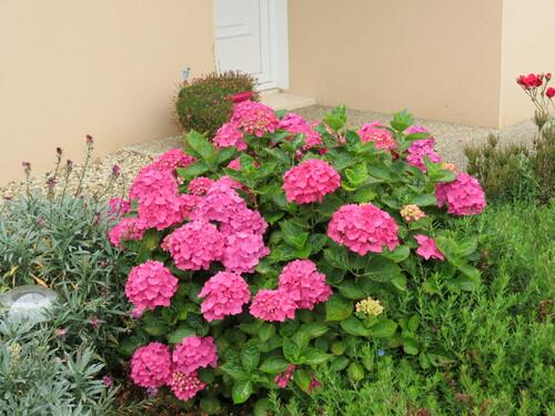 mon jardin en fleurs
