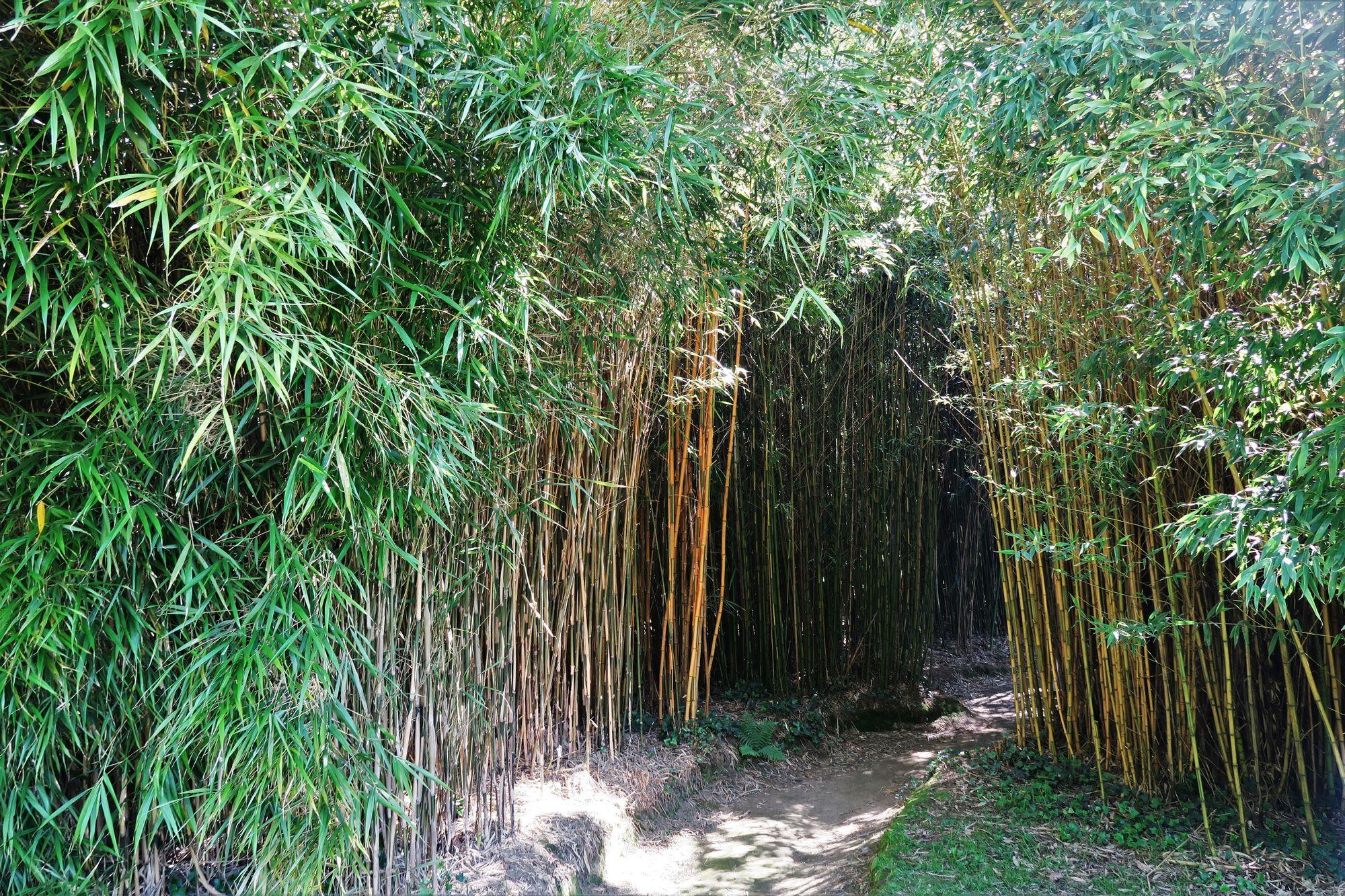 Parc Botanique de Haute-Bretagne : Bosquet des Bambous