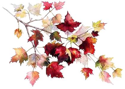Nature, feuilles, fleurs, arbres, Automne