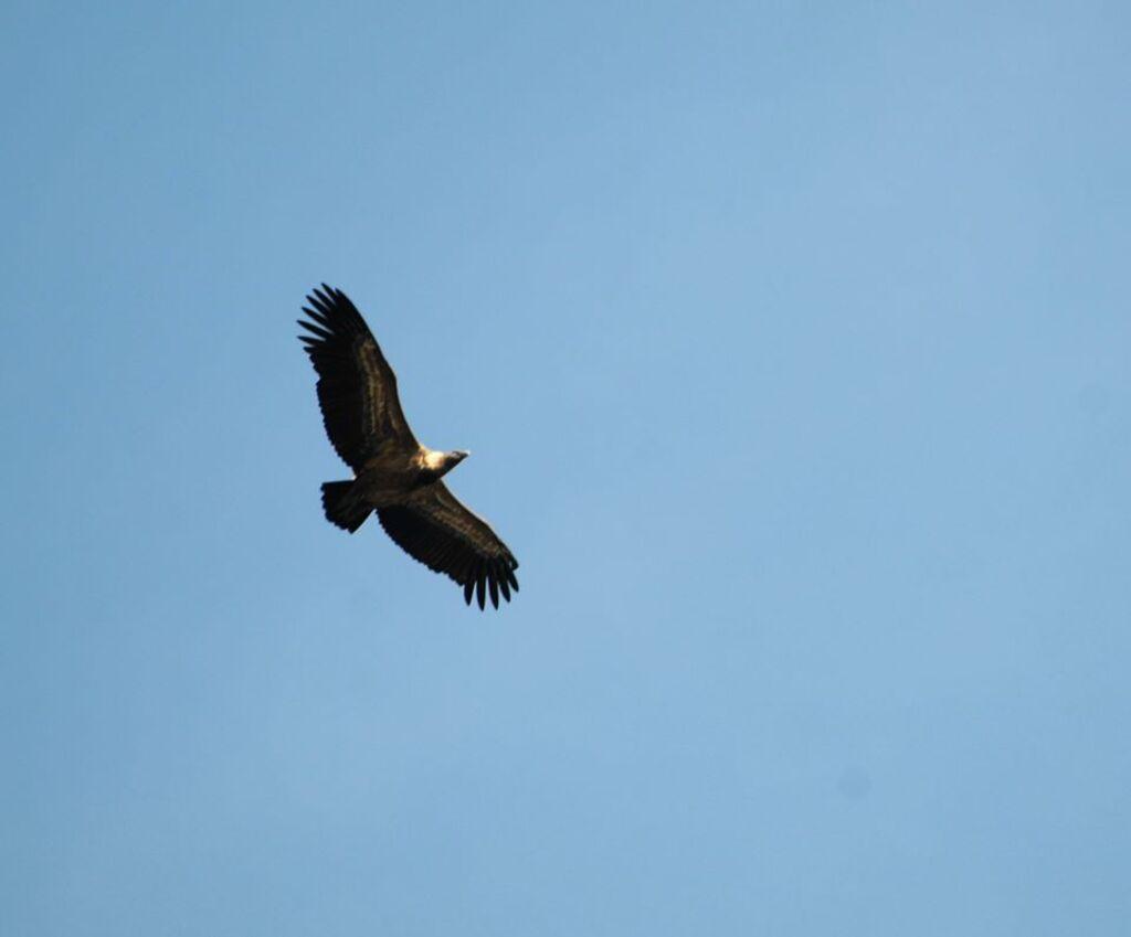 Rougon..La montagne des vautours...Fin