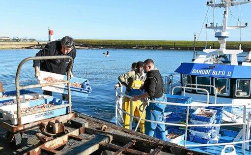 La CCIMBO poursuit la commercialisation du poisson débarqué sur les quais des ports de Cornouaille.