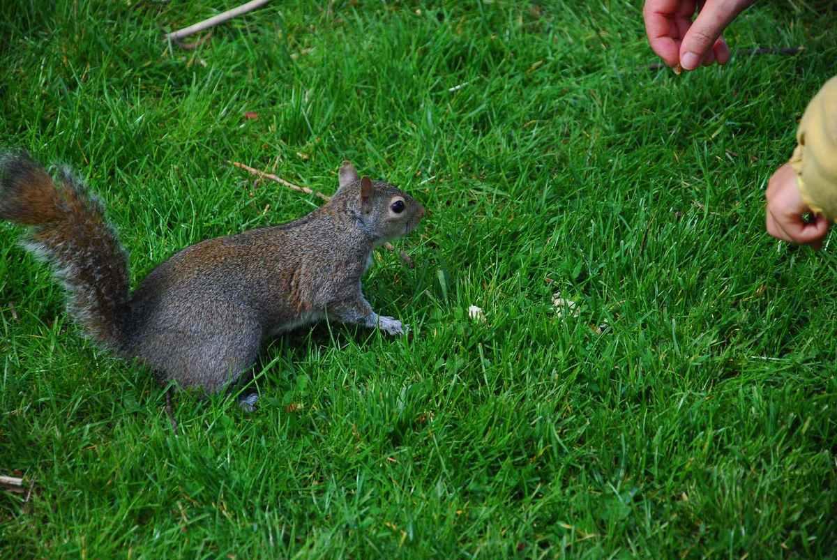 Les écureuils d'Hyde Park adorent les speculos !