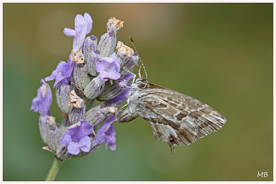Insectes-04-5889.jpg