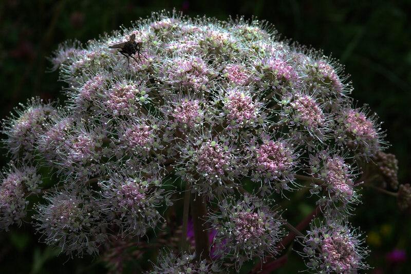 Fleurs des 4 saisons (#5)