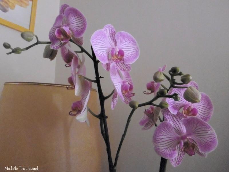 Une Orchidée pour mon anniversaire....