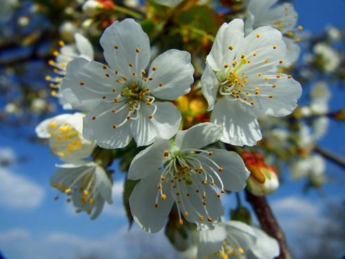 - Bonnes vacances de printemps