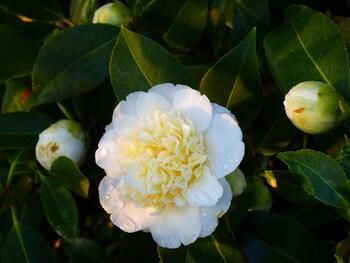 floraison de fin mars
