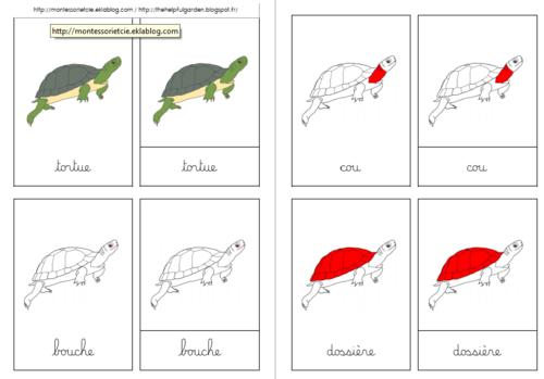 Nomenclatures sur la tortue