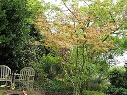 Une balade dans le jardin de Francis et Guy