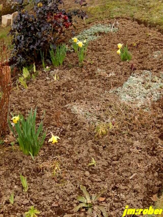 Jardin:Fond de ciel bleu ou de fleurs jaunes