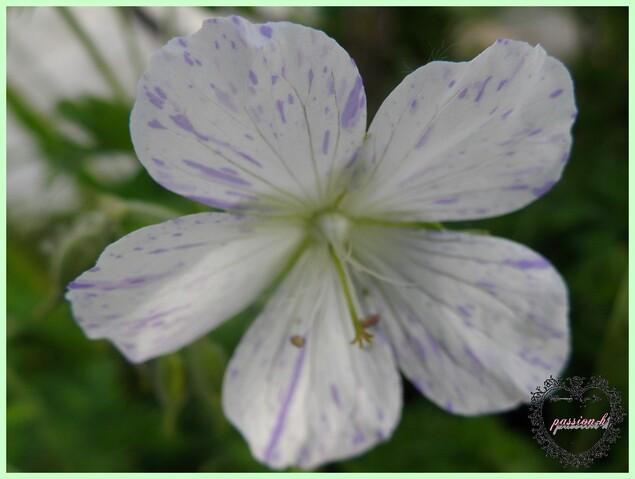 des histoires de fleurs (2)
