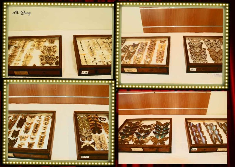 vitrines-papillons.jpg