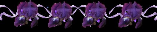 ♥ Les iris ♥
