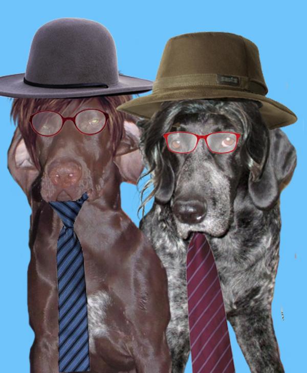 Créations drôles de mes chiens